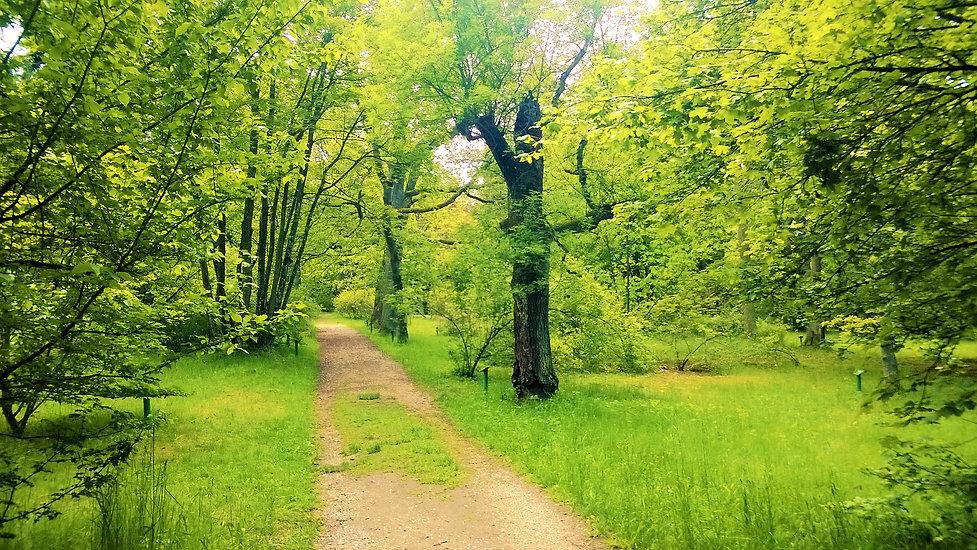 Vstupní_cesta_v_NPP_Americká_zahrada_v