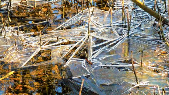 Detail ledové krusty, která se přes noc utvořila v Přírodní rezervaci Plané loučky