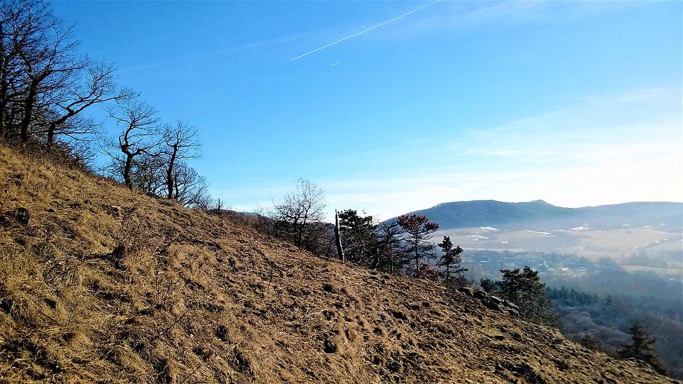 Přírodní památka Štěpánovská hora.jpg