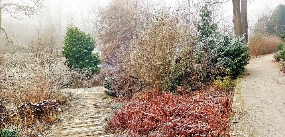 Zákoutí v zimní malešické botanické zahradě