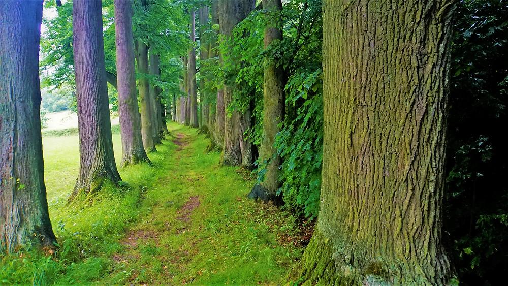 Památná alej k hrobce loučenské větve rodu Kleinů