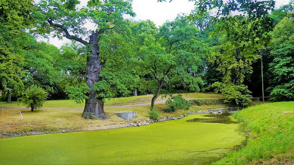 Zámecký park Krásný Dvůr je podle dendrologů skutečným pokladem