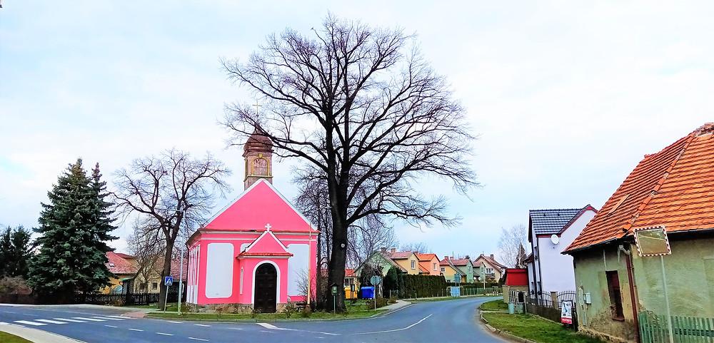 Račetický dub u evangelického kostela v Račeticích