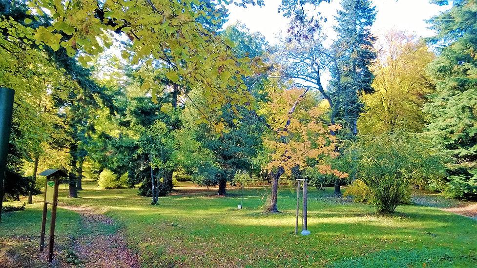 Arboretum v Domažllicích.jpg