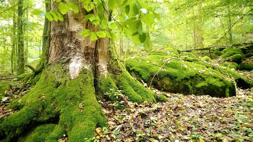 Přírodní rezervace Dlouhý vrch.jpg