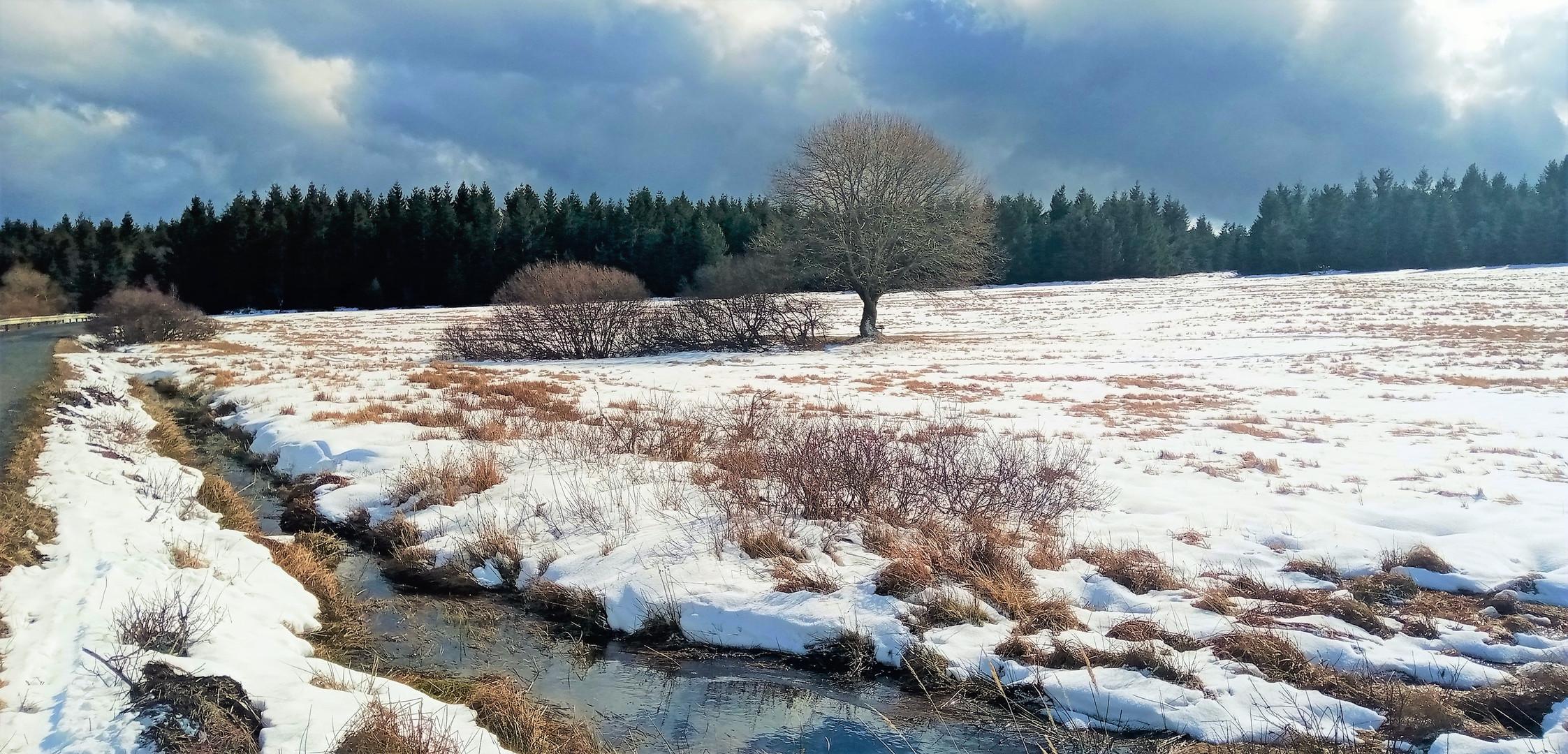 Galerie: Rašeliniště Cínoveckého hřbetu