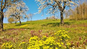 Přišlo jaro do vsi