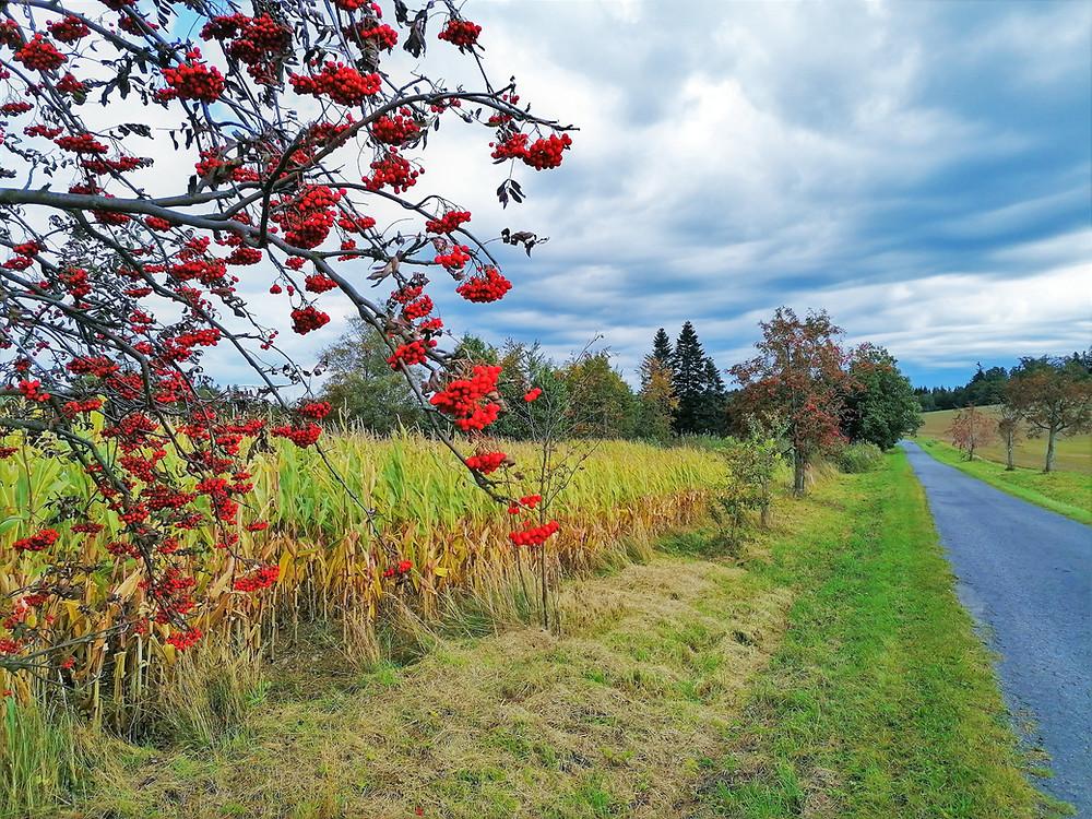 Podzim kolem Potštátu