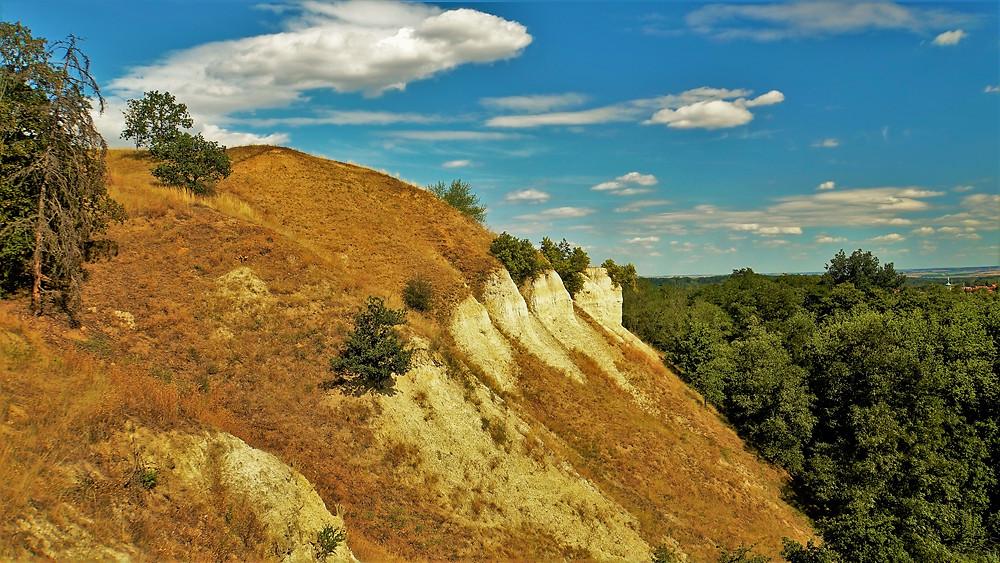 Přírodní památka Staňkovice chrání stepní teplomilnou vegetaci a hmyz