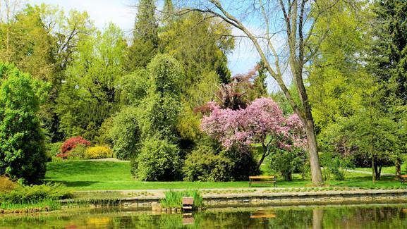 Tak vypadá jaro v bělolhotském arboretu