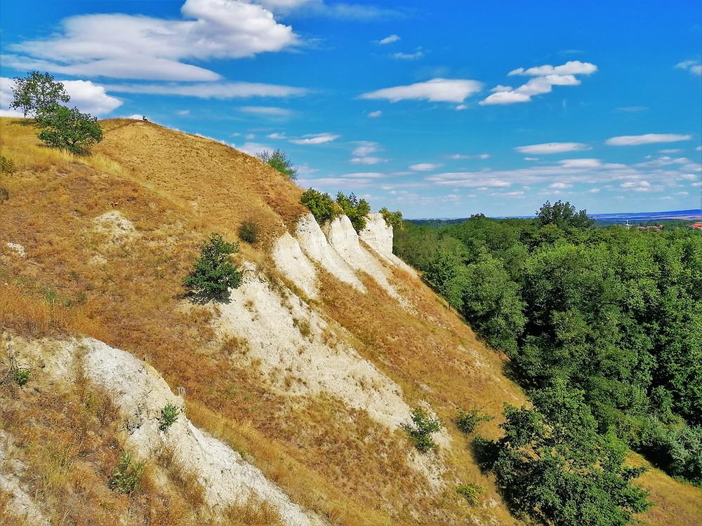 Prudké erozní stěny PP Staňkovice jsou tvořeny převážně písky a jíly