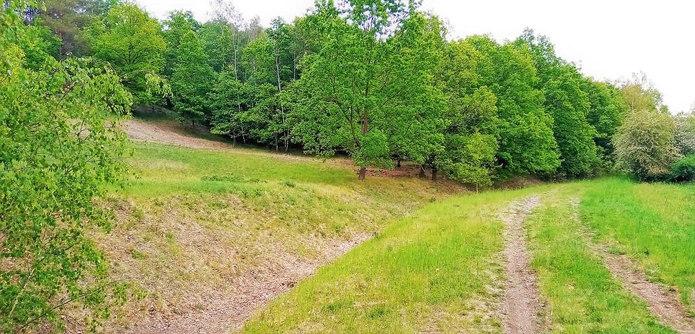 Nejčastěji vznikají česká slaniska ve srážkovém stínu pod Krušnými horami, ani toto Slanisko u Škrle není výjimkou