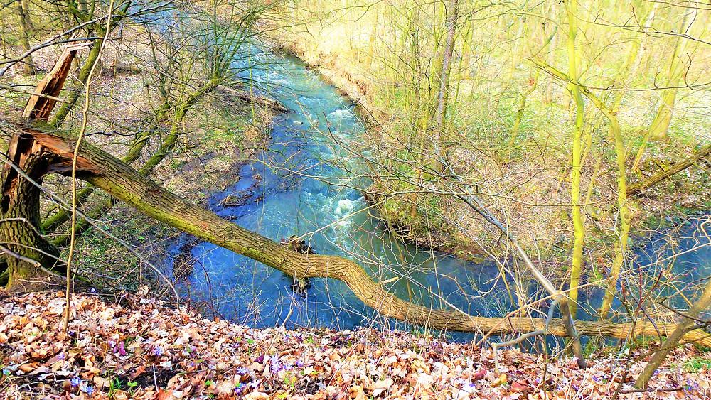 Ohyb řeky Liboc u Radechova