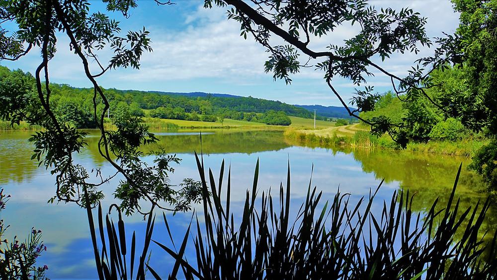 Na břehu rybníka v Nové Vsi