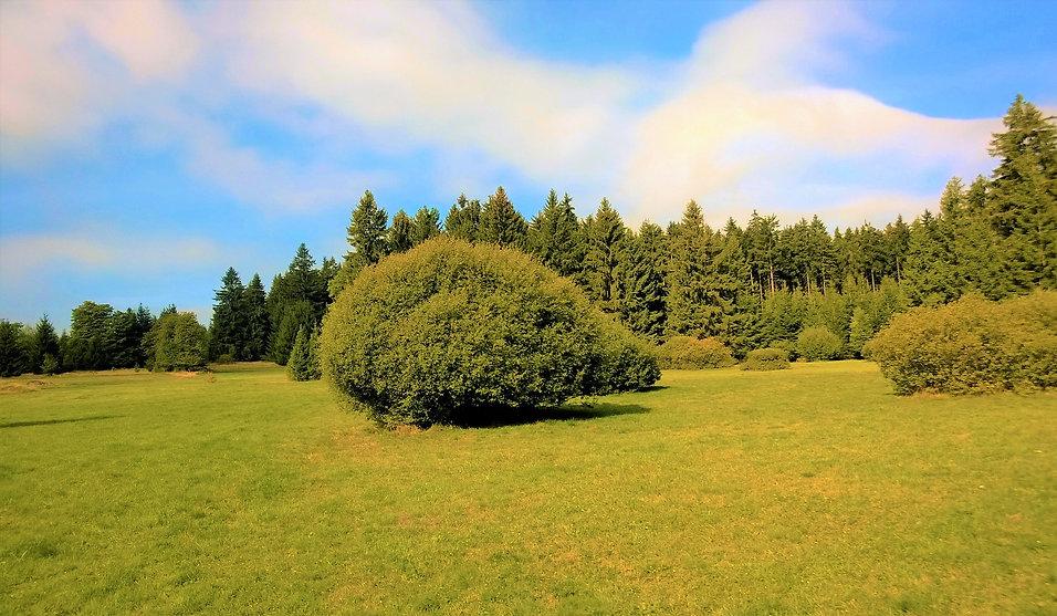 x - Přírodní památka Louky u Prostředníh