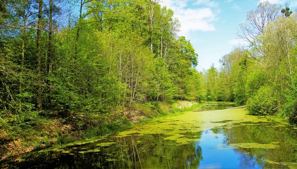 Lichtenštejnové se pokusili lužní lesy lehce přetvořit v anglický krajinářský park
