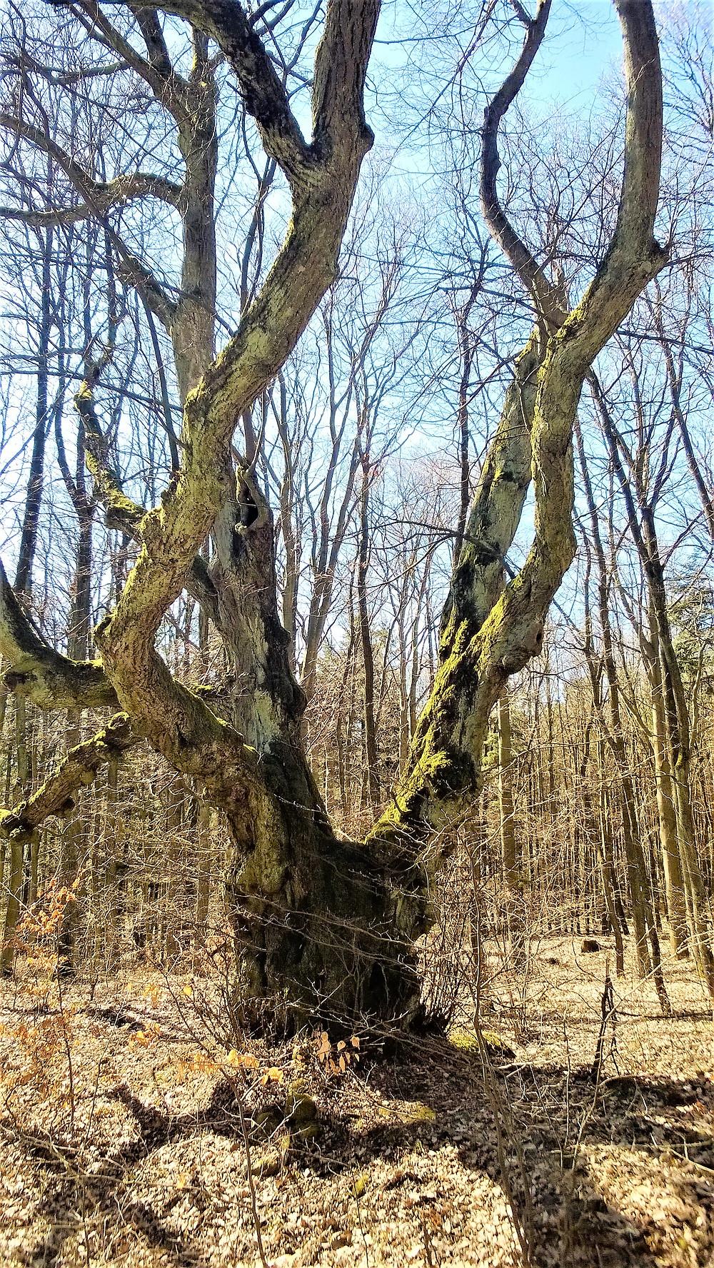 Strom splněných přání zalitý sluncem