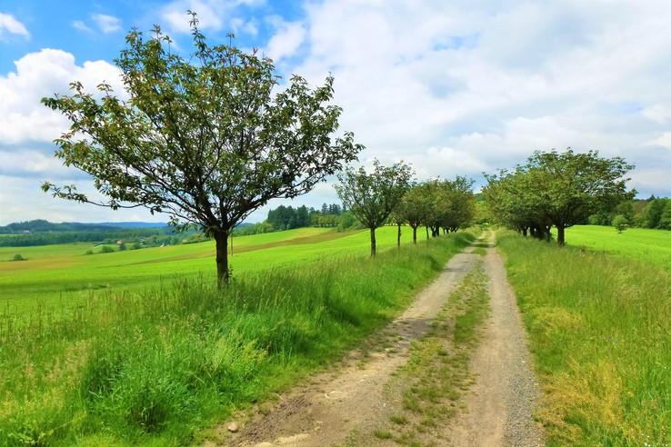 Galerie: Chráněná přírodní krajina Chudenicko