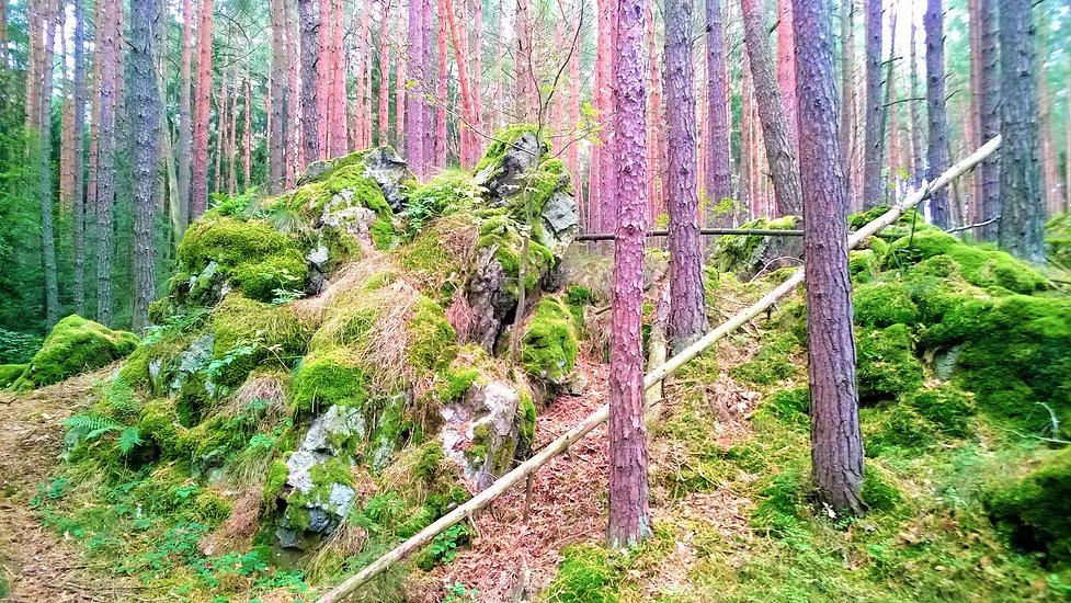 x - Přírodní rezervace Drahotínský les,