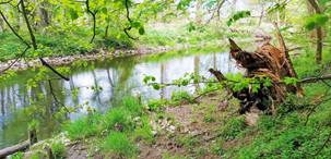 Národní přírodní rezervace Vrapač je bezzásahovým územím
