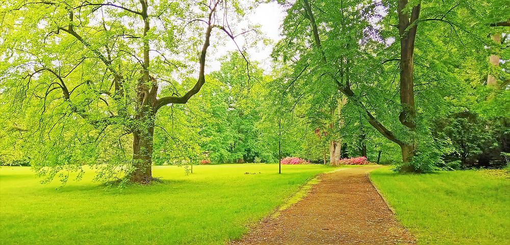 Bludovský zámecký park v průběhu června