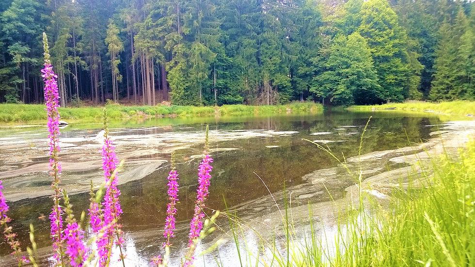 PP Kolowratův rybník.jpg
