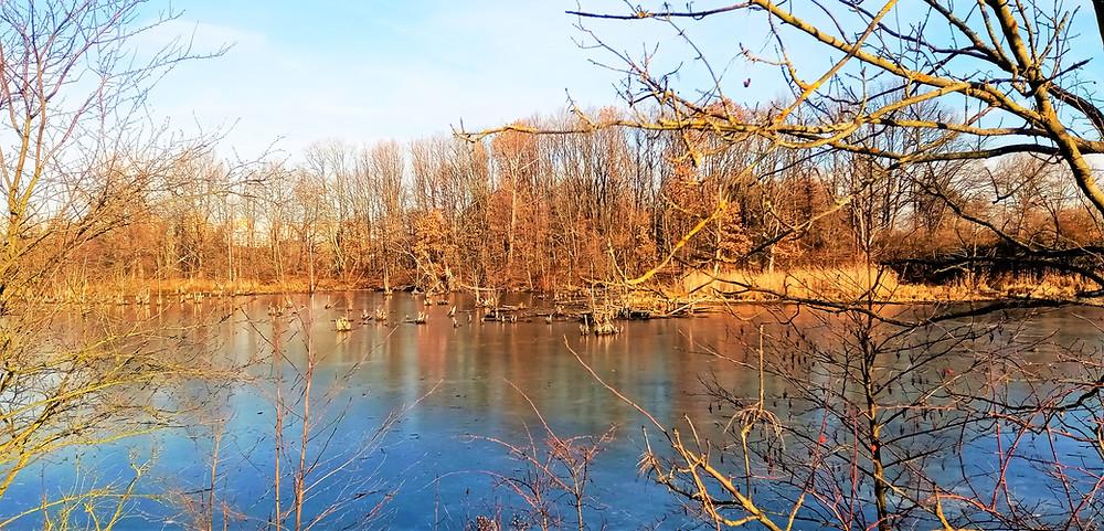 Zóna umírajících stromů v PR V Pískovně