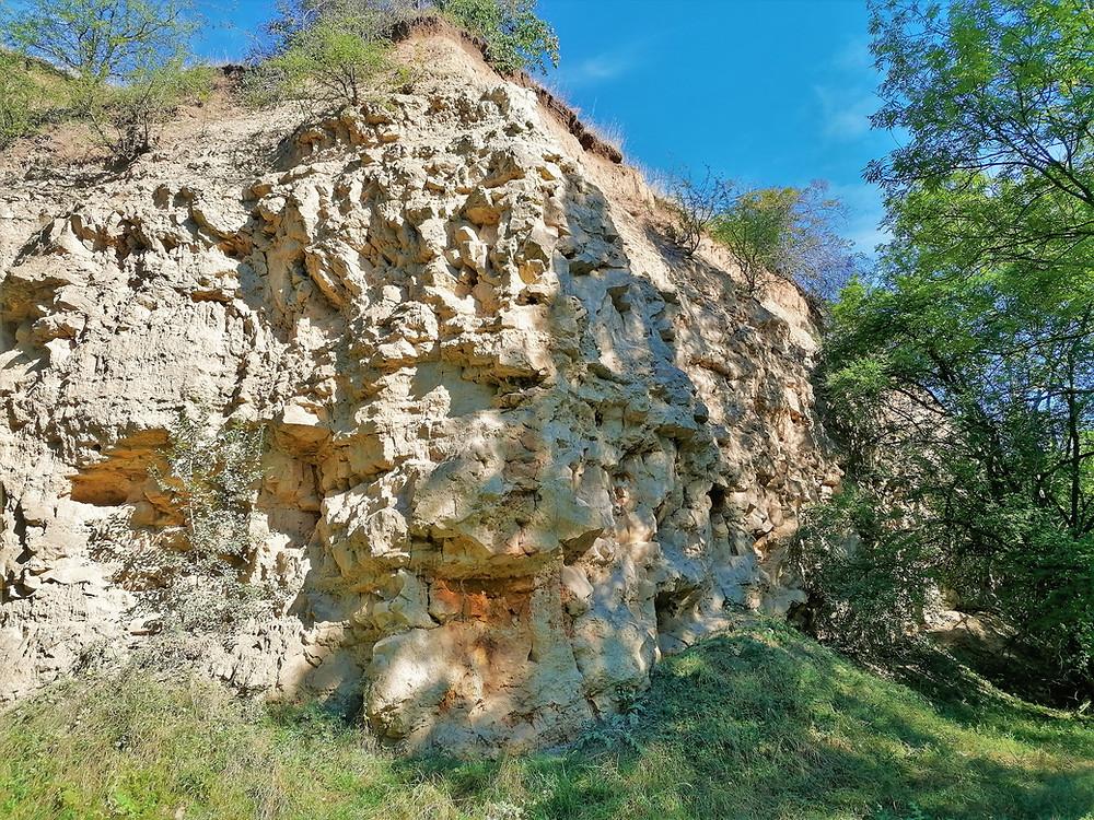 PP Miocenní sladkovodní vápence je důležitým nalezištěm schránek plžů