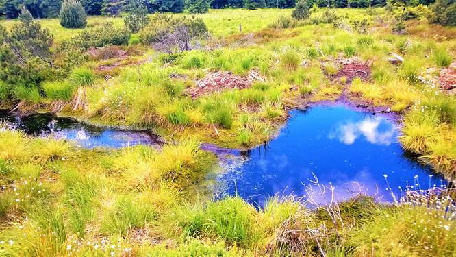 Galerie: Rašeliniště U Jezera