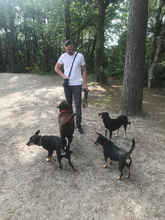 Sam Dog Training Group.jpeg