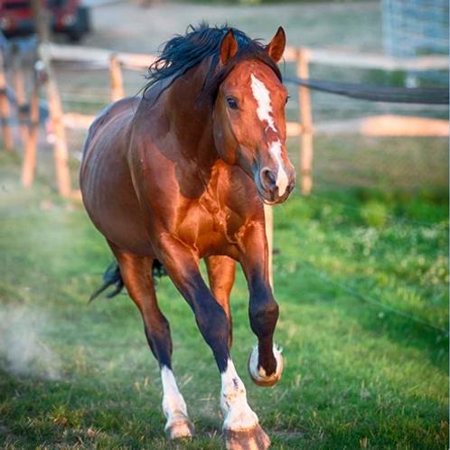 Patenschaft Pferd