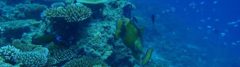 Maldives 03