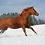 Thumbnail: Patenschaft Pferd