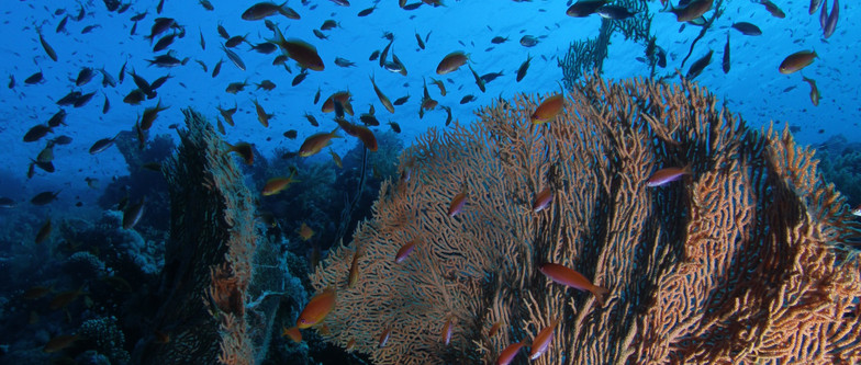 Mer Rouge 06