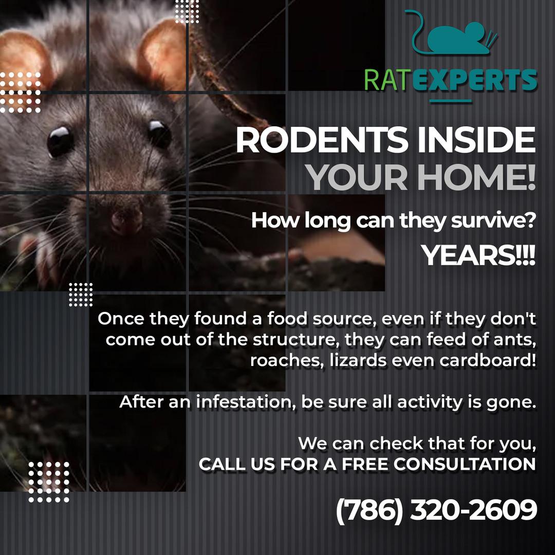 74---Rodents.jpg
