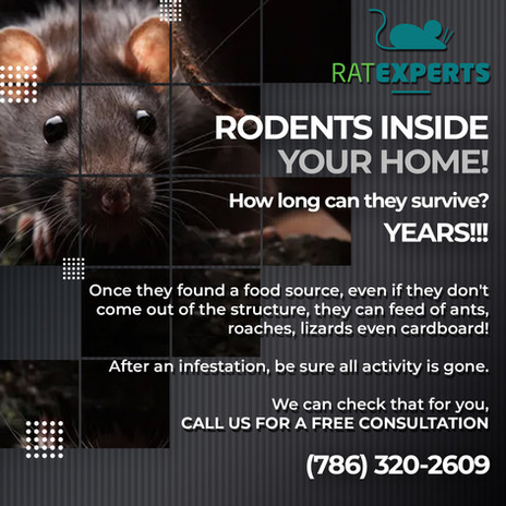 74---Rodents.jpg