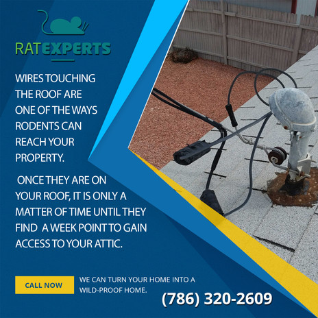 73 - Wires-Touching-the-Roof.jpg