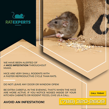 92---Mice.jpg
