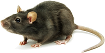 mouse-feature.png