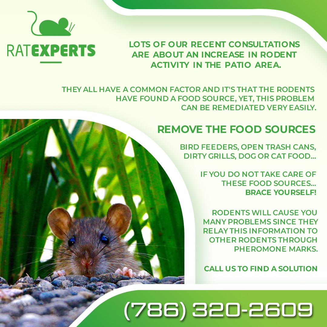 98---Rodents.jpg
