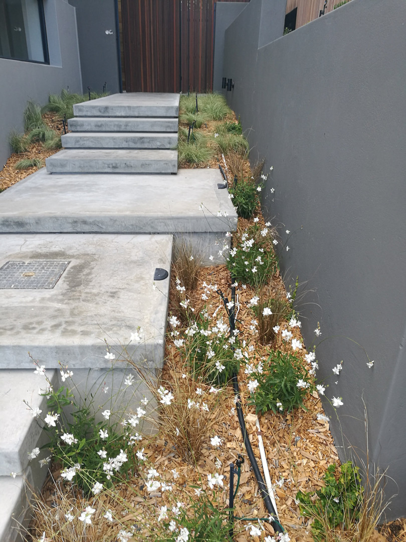 Houtbay Stair and planting