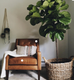 How to care for your indoor plants
