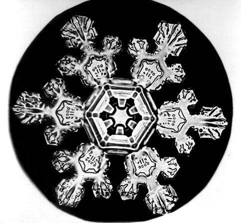 Snowflake  under microscope