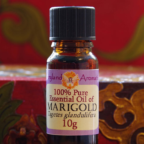 Marigold/ Tagetes