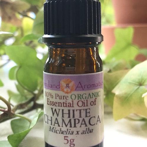 White Champaca Organic 100%