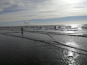 Little Whale on the Beach - Parang Khezr.jpg