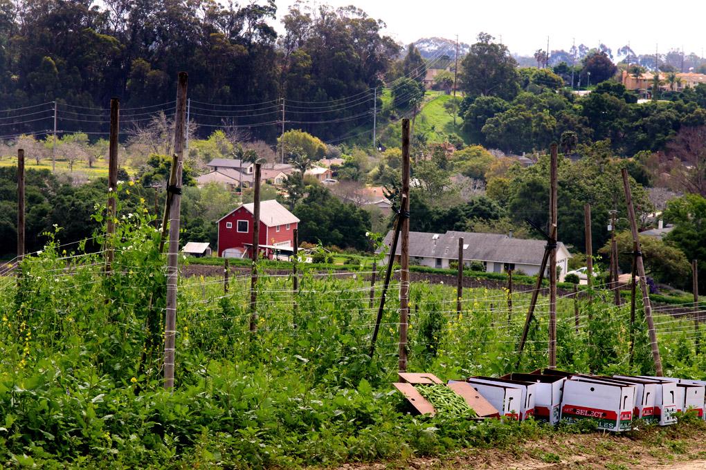 Ellwood Canyon Farms_0813