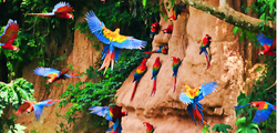 amazon birds.png