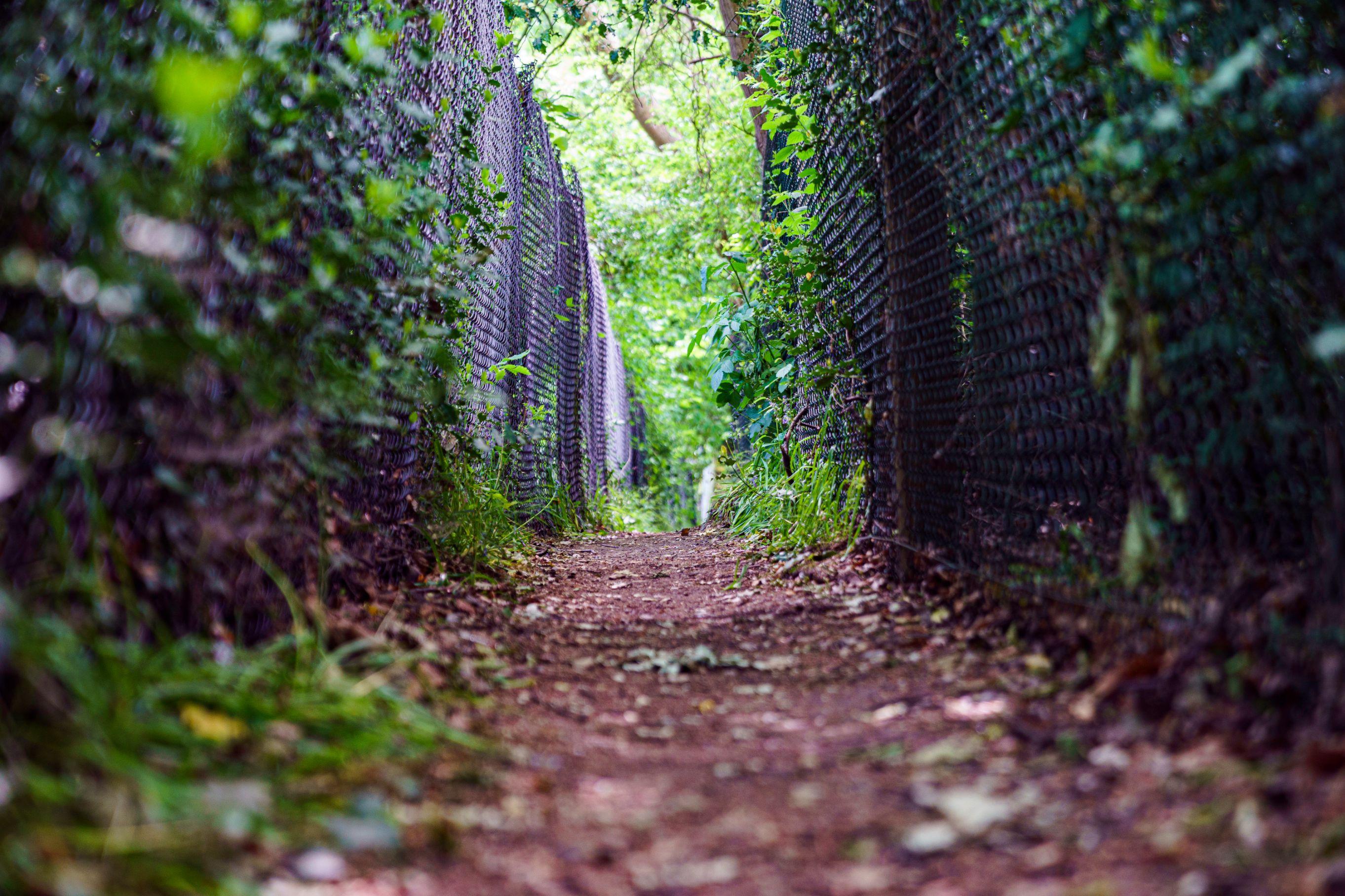Howlett's Kent Safari walk. A hidden free footpath that lets you see Elephants and Rhinos at Howlett