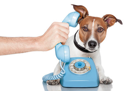 dog on the phone with male hand.jpg